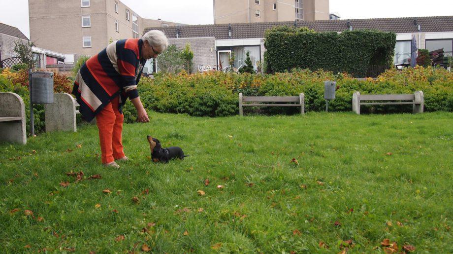 Vrijwilligerswerk met dieren
