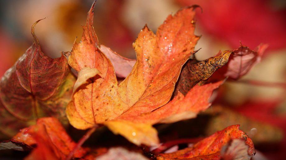 Column: herfst